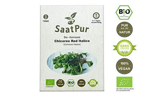 Preisvergleich Produktbild SaatPur Bio Keimsprossen - Chicory Red Italico - Keimsaat für die Sprossenzucht zuhause - 15g roter Chicoree