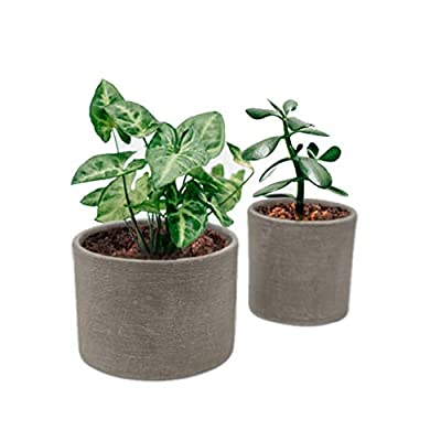 """Elly Décor Set 2 Pieces 5"""" & 4"""" Ceramic Planters for Plants Succulents with Drainage Hole for Indoors and Outdoors Pot, Gray Cement"""