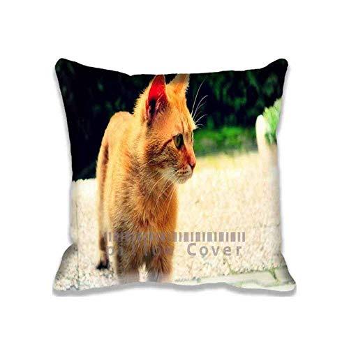 8888CASE Ginger Cat Zipper Pillow Covers for Crafts ; Custom Photo Animals Cushion Cover Pets Pillowcase Set Fundas para Almohada (60cmx60cm)