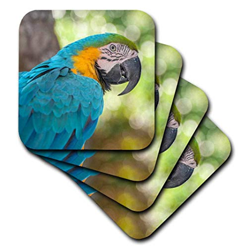 3dRose USA, Florida, Orlando, Blue-and-Yellow Macaw, Gatorland. - Soft Coasters, set of 4 (cst_208295_1)