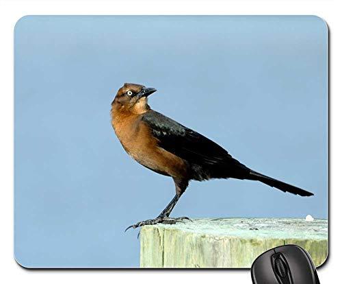 Mouse Pad - Brown Thrasher Bird Avian Wildlife Nature Animal