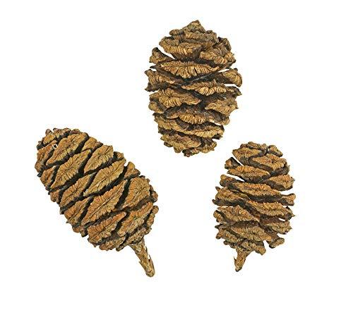 100 Samen Riesen-Mammutbaum -Sequoiadendron giganteum- ★ ★ ★ DER GIGANT UNTER DEN BÄUMEN ★ ★ ★