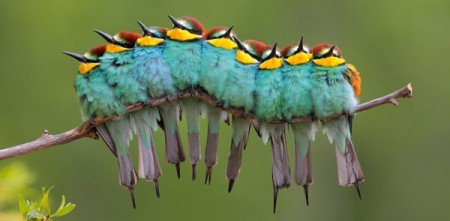 Geo-Postkarte 335 Freunde der Wärme Vögel kuscheln