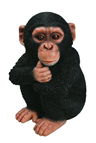 Vivid Arts XRL-CHM2-F Baby Chimpanzee Resin Ornament