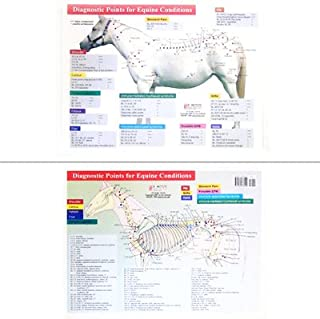 Diagnostic Points for Equine Conditions Chart