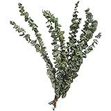 Kooshy 10 Piezas de Ramo de Hojas de eucalipto, decoración de Hojas de eucalipto Artificial Flores secas Eucalipto nórdico Natural Secado al Aire Flores Reales Adornos de Boda para Fiestas