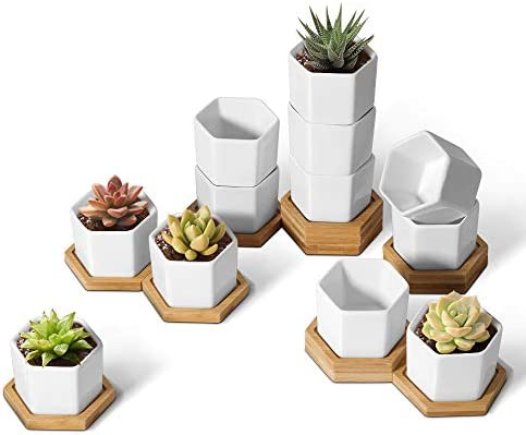 T4U Small White Succulent Planter Pots with Bamboo Tray Hexagon Set of 12 Geometric Cactus Plant product image