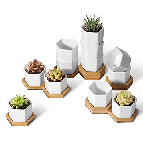 T4U Small White Succulent Planter Pots with Bamboo Tray Hexagon Set of 12, Geometric...