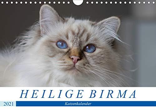 Heilige Birma Katzenkalender (Wandkalender 2021 DIN A4 quer)