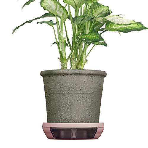 ポットキーパー 鉢 鉢皿 観葉植物の清潔グッズ お部屋きれいにお手入れ簡単ラクに シェルピンク