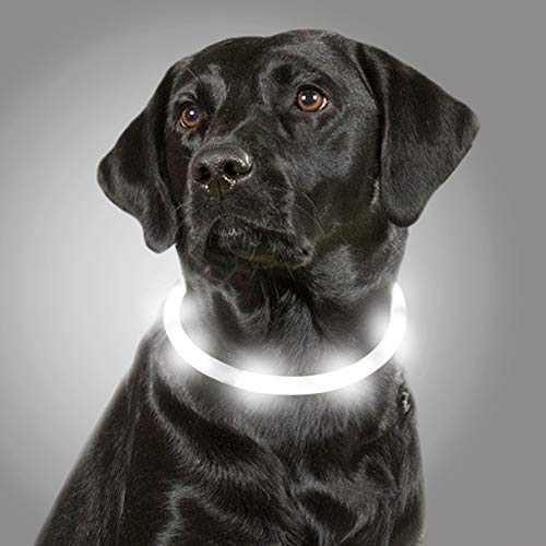 Joytale LED Leuchthalsband Hunde USB Aufladbar, Verstellbares Leuchtie Halsband für Große Mittel Kleine Hunde und Welpe, Hundehalsband mit Licht für Sicherheit, Weiß