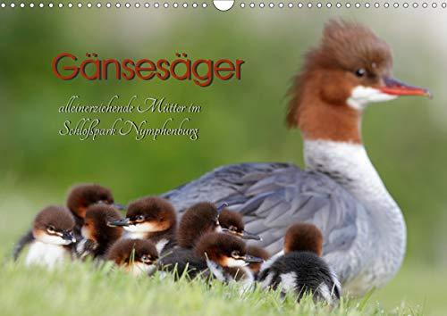 Gänsesäger - alleinerziehende Mütter im Schloßpark Nymphenburg (Wandkalender 2021 DIN A3 quer)