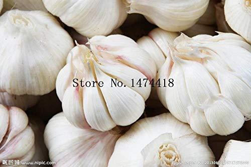 Preisvergleich Produktbild SANHOC Samen-Paket: Hot SalePcsSeeds Gesund und lecker stechend Sp Gemüsesamen Pure Natural und Bio-Gemüsesamen Schwarz
