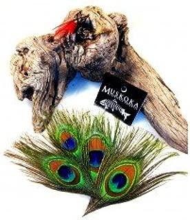 Muskoka Lifestyle Products Peacock Eye 100 pack