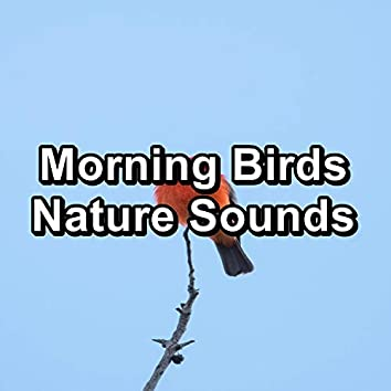 Morning Birds Nature Sounds