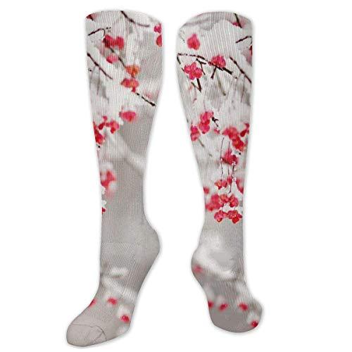 Not Applicable Hohe Socken , Populus Tremuloides Atau Quaking Aspen Polyester über dem Knie Bein Hohe Socken Lustige verschleißfeste Kleidersocken 50 cm
