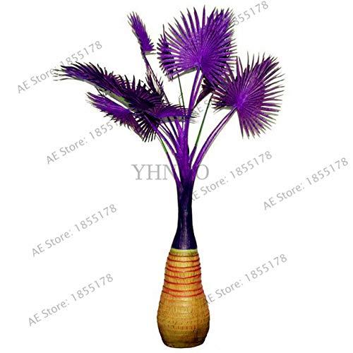 Pinkdose 10 Teile/paket Flasche palm tree Pflanzen, mehrjährige einfache wachsen baum Bonsai Töpfe Tropical Ornamental Balkon für Zuhause & amp; Garten: 2