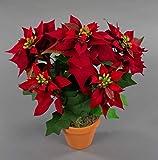 Seidenblumen Roß Weihnachtsstern Nature 38cm samt-rot im Topf PM künstliche Blume Kunstpflanze Kunstblumen Poinsettie