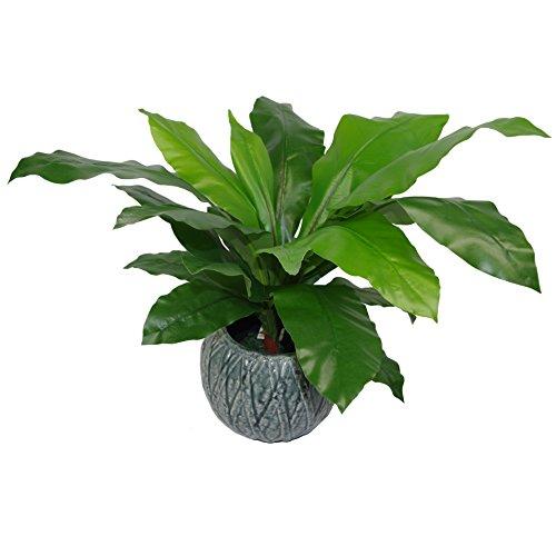 Leaf Planta de Helecho Artificial con Forma de Hoja de pájaro, 60 cm, Color Negro