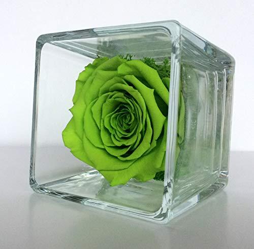 Rose éternelle Verte Cube, Rose et Mousse végétale stabilisée