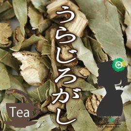 うらじろがし(裏白樫)茶1500g ウラジロガシ100% 裏白樫/うらじろがし/ウラジロガシ (健康茶・野草茶)