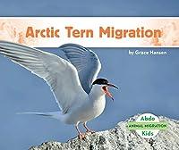 Arctic Tern Migration (Animal Migration)