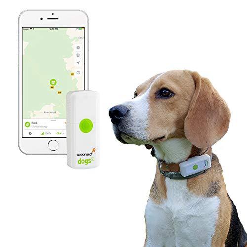 Weenect Dogs 2 - El collar GPS para perros más pequeño del