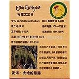 発芽率99%のレモンユーカリの種、ユーカリcitriodora、ナチュラル防虫剤、芳香族plant6pcs