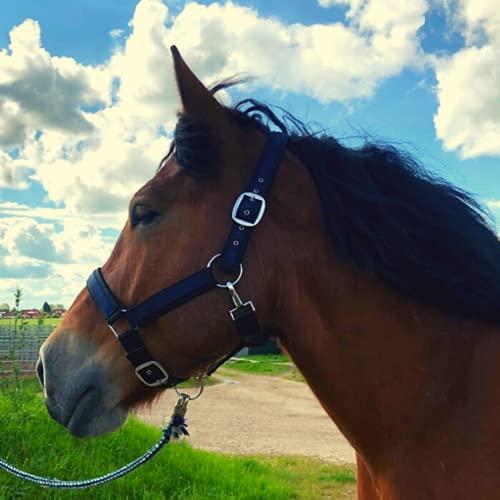 Cabestro para caballos de sangre fría | Cabestro xxfull, cabestro ajustable con 2 posiciones en la barbilla y la nuca (negro y azul, XFull (sangre fría)