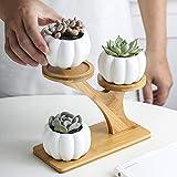 WENYOG Maceta 1 Set Ceramic Garden Pots Moderno Pumpkin Flowin Flower Pot Suculent Plant BOT 3 Bonsai Planters con Estante de bambú de 3 Niveles Macetas Colgantes (Color : Pumpkin)