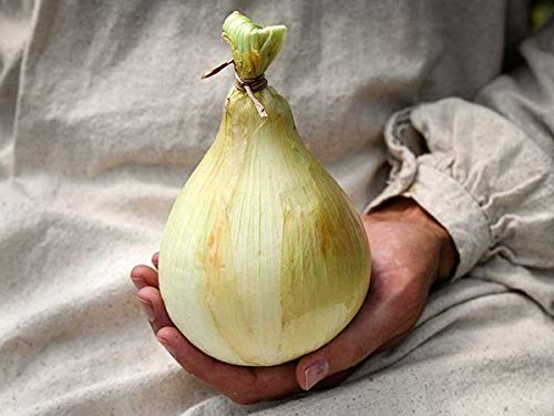 Las nuevas variedades nutritivas gigante china de semillas de cebolla chalota semillas 100PCS jardín semillas de hortalizas de verduras