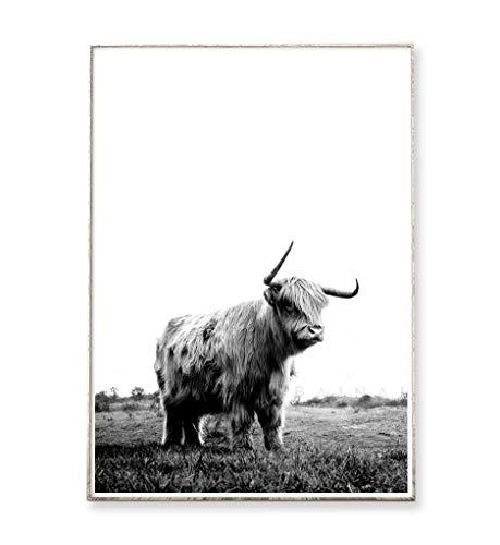 DIN A4 Kunstdruck Poster HIGHLAND COW -ungerahmt- Bild, Tier, Schottland, Kuh, minimalistisch, nordisch
