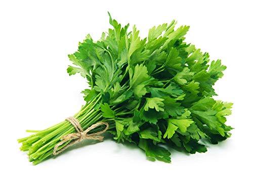 Semi di coriandolo - Semi di coriandolo per piantare in casa all'aperto - Non OGM - Semi biologici cimelio - Alta germinazione - Alta resa - Super deliziosa