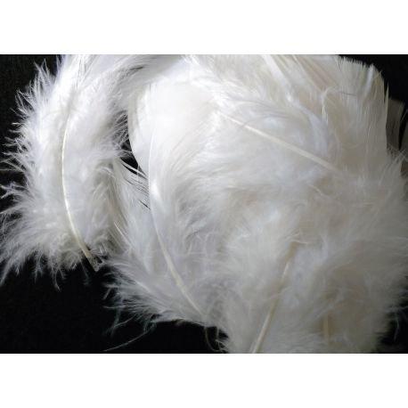 s m sas Environ 25 Plumes Coloris au Choix Deco fête Mariage Costume déguisement (Blanc)