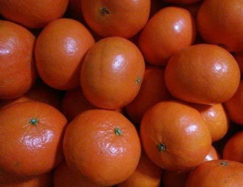 佐賀県産 はまさき みかん 1箱:約5kg入り バラ詰め 訳あり 柑橘 オレンジ
