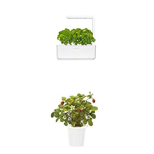 Click & Grow Smart Garden 3 jardinière d'intérieur 30 x 10 x 28 cm blanc (contient 3 capsules de basilic) + 2 recharges fraise (x3)