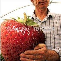 200pcs grands géants fruits rouges fraise graines jardin bricolage graines de fruits balcon semences, plantes en pot, matériel de jardin, bonsaï, maison