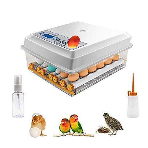 Incubadora de huevos Kacsoo Mini incubadora con Pantalla Digital de 16 huevos con volteo y eclosión automáticos incubadora de Huevos para gallinas, Patos, Gansos, codornices, Uso doméstico, etc