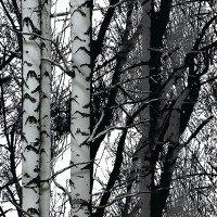 d-c-fix® Static Cling Premium raamfolie (zonder lijm) houtbomen 67,5 cm x 1,5 m 334-8028