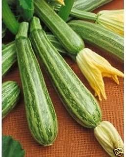 Italian Striped Zucchini Seeds Traditionalearlyitalian Favorite 20 Count