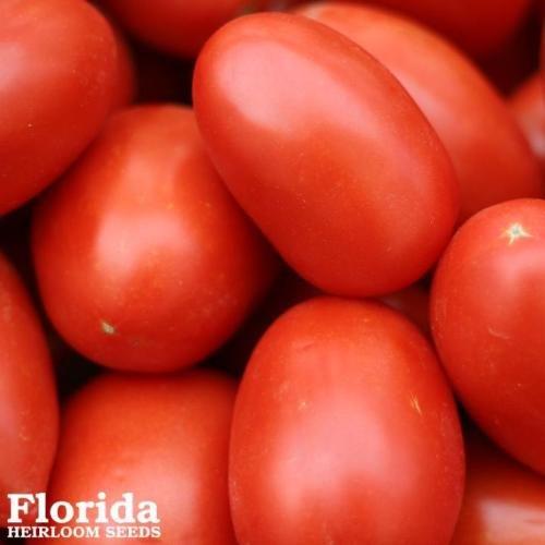 ROMA TOMATE 150+ Heirloom Semences Potagères Pâte sauce tomate NON-OGM