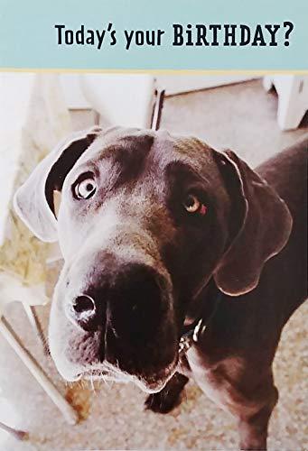 Can I Fetch You Anything - Happy Birthday Greeting Card with Black Labrador Retriever Dog