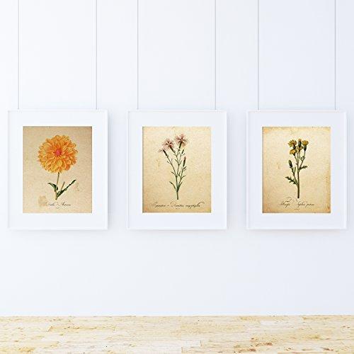 Pack de láminas Air. Posters con imágenes de botánica. Decoración de hogar. Láminas para enmarcar. Papel 250 Gramos