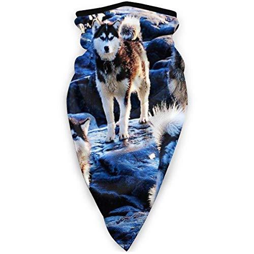 power1 UV-Gesichtsschutz Bandana, atmungsaktive Sturmhauben-Halsmanschette für staubdichten Sonnenschutz Schal-Husky (1) Schwarz