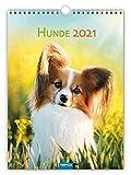 Classickalender 'Hunde' 2021: 24 x 33 cm