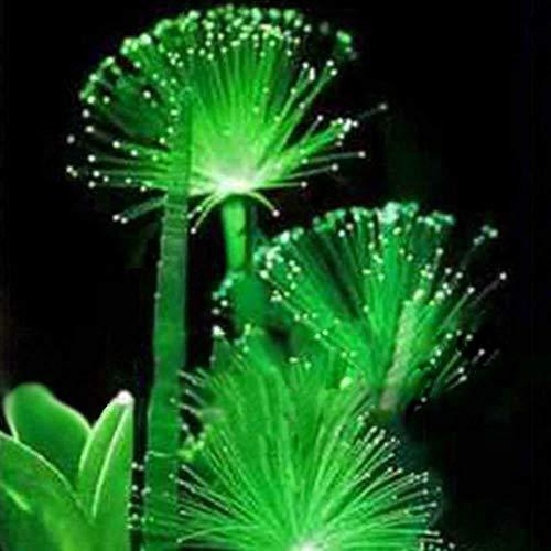 Seltene Bonsai, 100 PC Smaragd fluoreszierende Blumensamen, Nachtlicht emittierenden Pflanzen