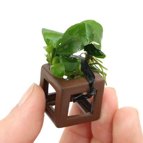 (水草)組織培養 エビの隠れ家 アヌビアスナナ付 (無農薬)(3個) 北海道航空便要保温