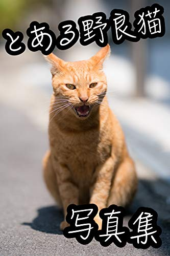 とある野良猫の写真集
