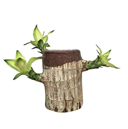 BIEKANNM Mini Brazilian Wood Potted Plants Clean Air Lucky Wood Groot Plant Pot Hydroponic Plants Indoor Water Culture Desktop Green Plants, with Basin (6-7 Cm In Diameter Brazilian Wood + Groot)
