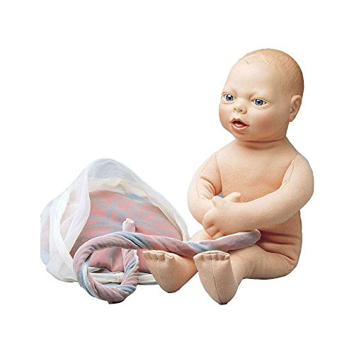 Feto-Modell, Baby bambino strati impostazioni bambino, a distanza urologia, vita grande